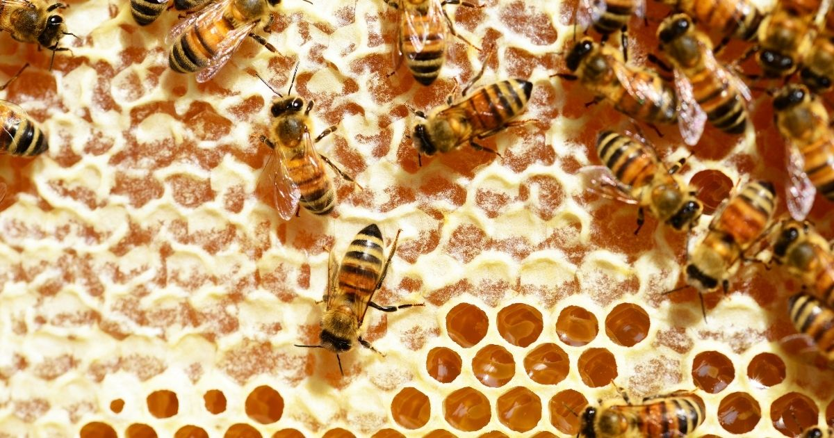bees building hive